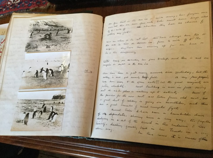 Page from Levick's first notebook with photographs and written descriptions of penguin behaviour.