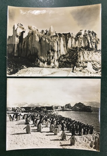 Two loose photographs from Levick's second notebook depicting of Cape Adare and Adelie penguins.